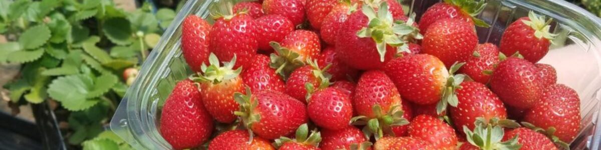 strawberries in 2 containers